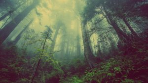 Dark Woods Forest